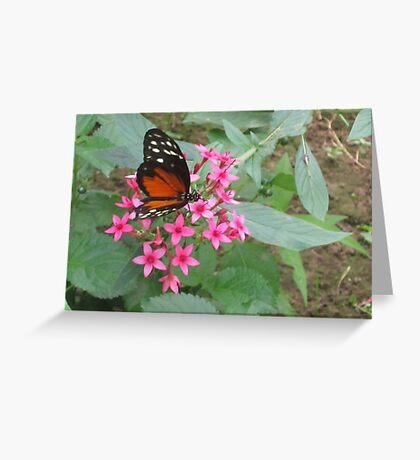 Painted Orange on Petals Greeting Card
