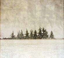 snow trees by paulgrand