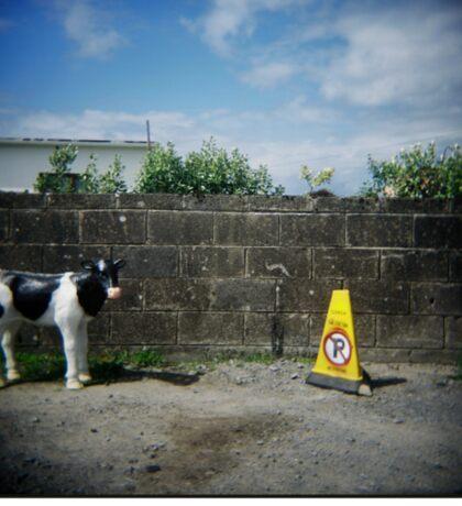 Holga Cow Sticker