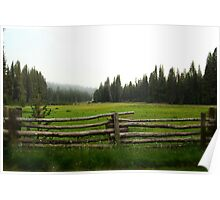 Green Meadow of Sequoia Poster