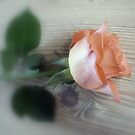 Fallen Rose..  by Kate Towers IPA