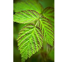 Fresh Green Leaf Abstract Photographic Print