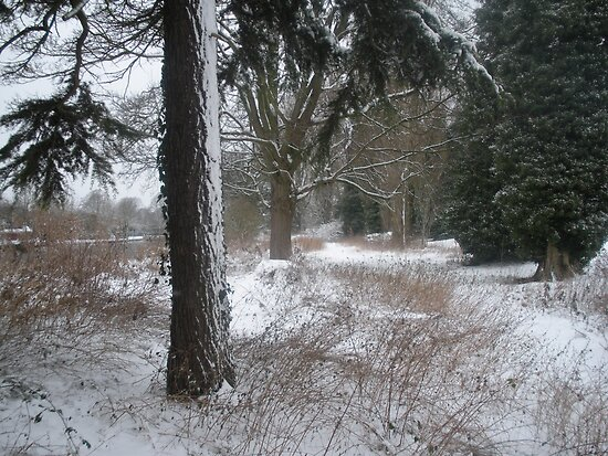 Snow Scene by Amie Swannell