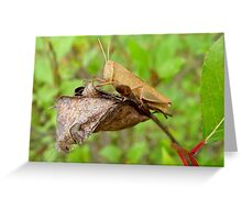 Carolina Locust Greeting Card