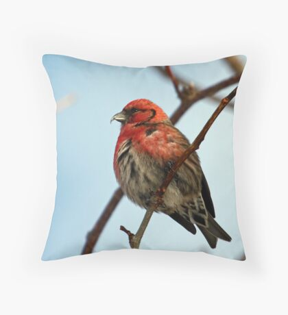 White Winged Crossbill - 1 Throw Pillow