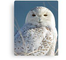 Snowy Owl Eyes Canvas Print