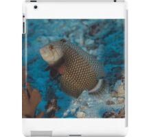 Rockmover Wrasse iPad Case/Skin