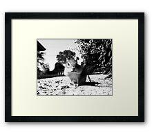Chipmunk Black&White Framed Print