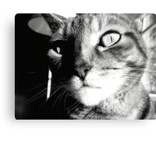 Cat Black&White Canvas Print