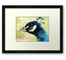 Peacock's New Crown Framed Print