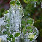 Frozen Green by LizzieMorrison