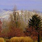 Autum trees by Cricket Jones