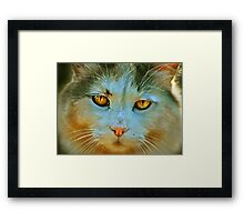 Jills Cat Framed Print