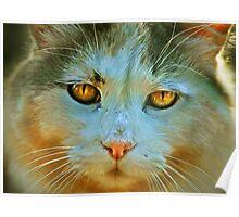Jills Cat Poster