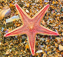Starfish by Orla Cahill