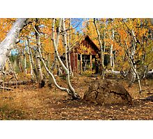 Old Cabin In The Aspens Photographic Print