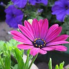 Vibrant Pink and Purple Summer Flowers by MidnightMelody