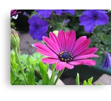 Vibrant Pink and Purple Summer Flowers Canvas Print