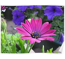 Vibrant Pink and Purple Summer Flowers Poster