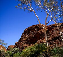 Cycads at Kings Canyon by Bartt