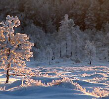 Tree of Light by Petri Volanen