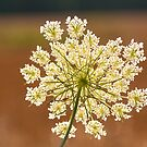 Hogweed by Erik Schlogl