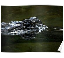 Crocodile Eyes Poster