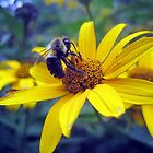 busy little bumble bee by LoreLeft27