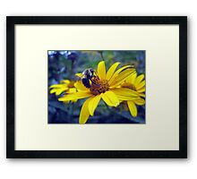 busy little bumble bee Framed Print