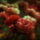 Card (roses) by myraj