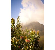 Of moutains and proteas Photographic Print