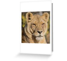 31915 lioness Greeting Card