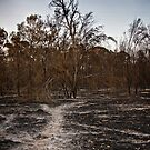 Burnt by Samantha Cole-Surjan