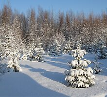 New Snow  by L J Fraser