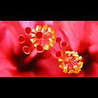 hibiscus by christopher  bailey