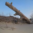 Wood by Jacker