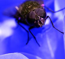"""""""Fly on a bed of blue"""" by Sabine Fink"""
