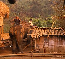 Dawn in a village of the Lisu Hill Tribe. by Peter Stephenson