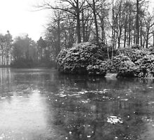 Oostkamp: lake  by Micky McGuinness