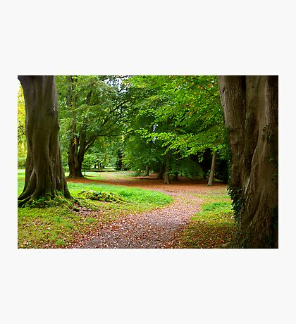 The Leafy Path Photographic Print