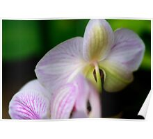 From Behind The Orchid Poster