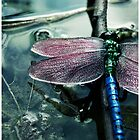 Dragonfly by aesthetic221