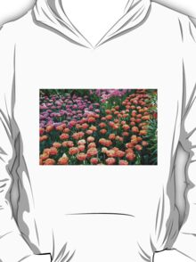 Pink and Orange Tulips - Keukenhof Gardens, Netherlands T-Shirt