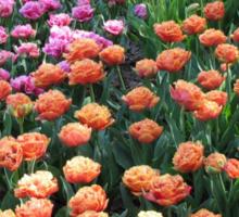 Pink and Orange Tulips - Keukenhof Gardens, Netherlands Sticker