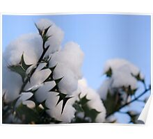 Snow topped holly Poster