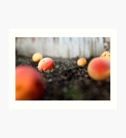 Fallen Peaches Art Print