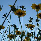 Flowers by jamiep1113