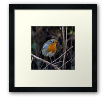 WINTER ROBIN II Framed Print