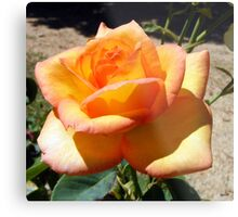 Roses..are not always Red Metal Print