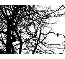 Raven On a Tree Photographic Print